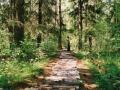 23.Ścieżka Edukacyjna Żebra Żubra – najstarsza ścieżka przyrodnicza w Polsce