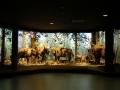 3.Muzeum Przyrodniczo – Leśne - wystawa stała