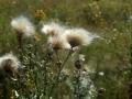 Puszczańskie łąki