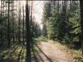 18.Puszcza Białowieska