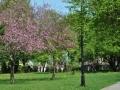 12.Malowniczy park miejski w Hajnówce