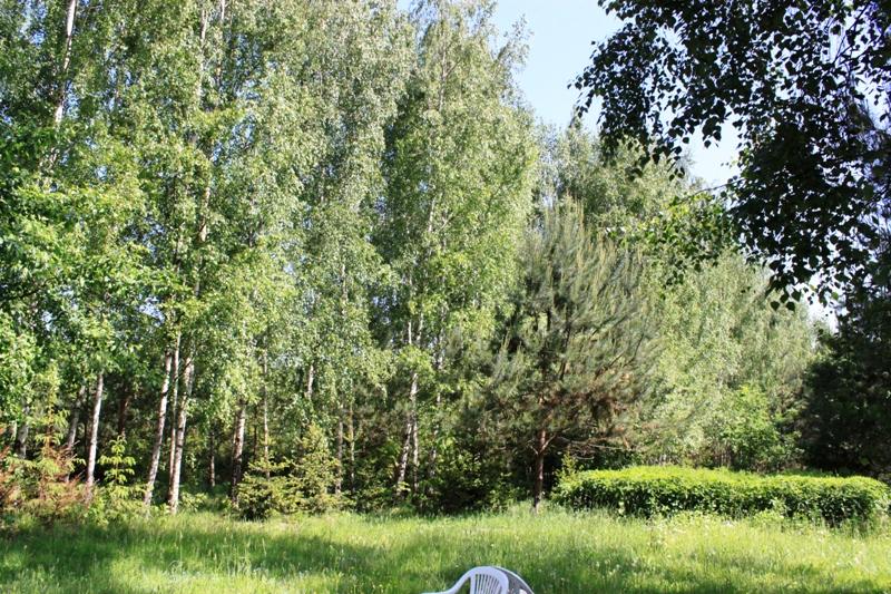 Białowieska polana